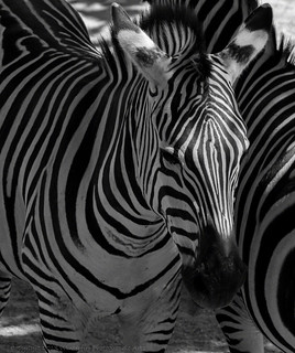 Black and White (Explore)