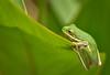 Life on the Edge (Jeff Clow) Tags: macro nature garden dallas texas amphibian dfw ©jeffrclow
