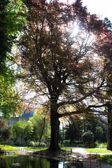 See through the light (MauricioMoura.com) Tags: park france tree europe frana places rouen