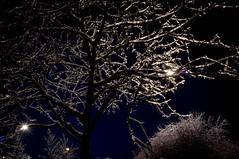 Night Scene, Ice storm in Toronto Canada 2013 (Stephen G Woo Photo journey) Tags: camera trees winter light snow toronto ontario canada storm cold green ice rain night stars photography star evening photo cool long exposure branch fuji photographer g branches hill steve freezing photographic woo richmond stephen photograph freeze finepix area shutter fujifilm icy gta tre richmondgreen x100  gurie stephenwoo  stephengwoo sgwoo