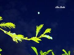 Noite em Goiânia, Goiás, Brasil (Alan Bailão ⎝⏠⏝⏠⎠) Tags: flores azul brasil céu noite folha goiânia goiás