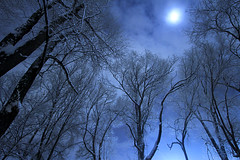 Winter Elms (arbyreed) Tags: longexposure nightphotography trees winter moon snow night elm ultrawide highiso elmtrees arbyreed