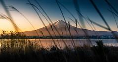 Fuji-san in the morning (Kwanchai_K) Tags: morning travel autumn light sky cloud mountain lake snow water japan sunrise landscape ngc landmark traveller mount fujisan mtfuji yamanashi kawaguchiko kawaguchilake japanlandmark