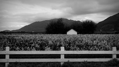 Fence (ChuckanutQuirks) Tags: bw blackwhite sony fields skagit farms skagitcounty farmfields rx100 ennoiretblanc dscrx100