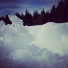 Neige devant la forêt