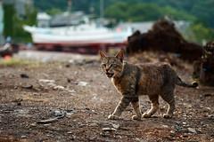 Rusty (rampx) Tags: japan cat boat dock rusty yamaguchi neko   hagi