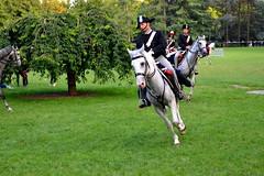Bicentenario Carabinieri - 1814/2014 (MiniManiaco) Tags: torino cavalli cavallo carabinieri animali animale cavaliere bicentenario forzearmate armadeicarabinieri
