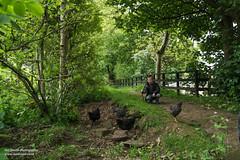 KelburnCastle-15061406 (Lee Live: Photographer (Personal)) Tags: woodland waterfall estate secretgarden walledgarden ayrshire largs ropeswings kelburncastle adventurecourse kelburnglen highwalkways