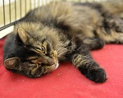 Hugo-DSC_0004 (Ali Crehan) Tags: shelter cat september 2016