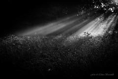Alba (elena.barsottelli) Tags: sun autunno autumn aurora risingsun sunrise ray light wood wild atmosfera atmosphere quiet infinity peace