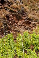 Bremmer Calmont (Bremm Calmont) (HEN-Magonza) Tags: mosel moselle bremm calmont bremmercalmont weinberg vineyard rheinlandpfalz rhinelandpalatinate deutschland germany