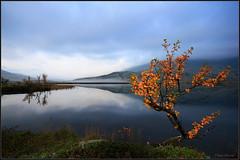 New day (TrondSphoto) Tags: september sunrise rondanenationalpark norway fog fall firstlight birch lake light leaves trondsphoto canon
