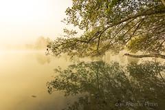 DSC04917_s (AndiP66) Tags: bannwil bern schweiz ch berken aare fog mist nebel autumn herbst light licht morning morgen river fluss water wasser reflections spiegelungen kantonbern cantonberne oberaargau switzerland sony sonyalpha 77markii 77ii 77m2 a77ii alpha ilca77m2 slta77ii 1116mm tokina superwideangle tokinaaf1116mmf28 f28 atx116prodx andreaspeters