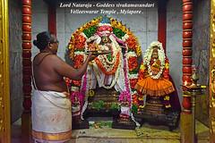 Lord Nataraja -Goddess Sivakamasundari , Velleeswarar Temple ,Mylapore . (Kapaliadiyar) Tags: kapaliadiyar velleeswarartemplemylapore velleeswarartemple purattasi purattasinatarajaabishekam nikond810 nataraja natarajarabishekam natarajadarisanam lordnataraja sivakamasundari