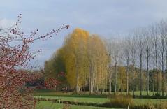 herfstlandschap (jehazet) Tags: landschap landscape herfst herfstkleur fall red yellow