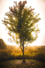 October (Anthonypresley1) Tags: illinois nature tree trees landscape anthony presley anthonypresley grass gold light sun old retro vintage leaf leaves brown portrait