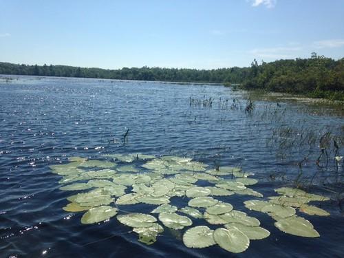 Little Togus Pond - www.amazingfishametric.com