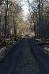 ckuchem-7064 (christine_kuchem) Tags: abholzung baum baumstmme bume einschlag fichten holzeinschlag holzwirtschaft wald waldwirtschaft