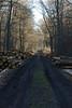 ckuchem-7064 (christine_kuchem) Tags: abholzung baum baumstämme bäume einschlag fichten holzeinschlag holzwirtschaft wald waldwirtschaft