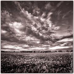 lever de soleil sur la campagne HDR-N&B (jeje62) Tags: campagne landscape leverdesoleil paysage sunrise lillers nordpasdecalaispicardie france fr hdr dri nb bw blackandwhite