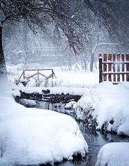 December stream (2) (Little Blind Chicken) Tags: winter spring december stream snow snowy snowfall kharkiv ukraine украина харьков