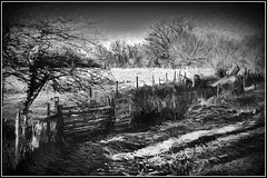 Early Frost (williamwalton001) Tags: monochrome gate gardens woodlands wood weather framed fineart fence countrypark texture borders