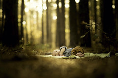 Resting in the Forest of Imaginations (Phillip Haumesser Photography) Tags: philliphaumesser baby child forest kid light love magic magical mystical newborn woods