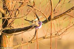 Left behind (JRAMFotograf) Tags: teat tree sunshine napp