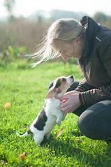 Maya (Marc_Gendron) Tags: dogs beagle pet people nice welcome fun