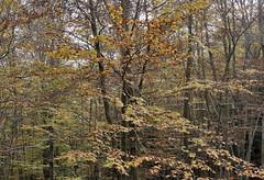 EL MONTSENY 1 (Andreu Anguera) Tags: naturaleza otoño parquenatural elmontseny barcelona girona catalunya andreuanguera