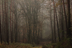 November (nettisrb) Tags: wald wood forrest nebel licht light landscape landschaft nature bume germany tree trees tanne tannen deutschland