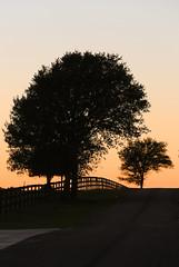 Hill on Joseph Road (wyojones) Tags: texas fieldstore wallercounty josephroad sunset dusk fence trees silhouttes road country wyojones np