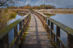 Tablas de Daimiel en otoo (Carhove) Tags: autumn otoo nature naturaleza tablasdedaimiel water agua landscape paisaje
