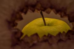 Apple Records (phil1496) Tags: beatles macro apple macromondays