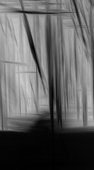 Path (Lee Barnsley) Tags: trees multiple exposure mutlipleexposure icm abstract incamera dsr