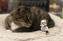 December 4th 2016 - Project 366 (Richard Amor Allan) Tags: project366 cat feline moggy tabby bed whiskers fur starwars lego stormtrooper toy