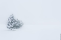 Simplicity (Jake Rogers Photo) Tags: backroads rural midwest whiteout snow winter trees simple simplicity landscape snowy snowstorm winterstorm storm
