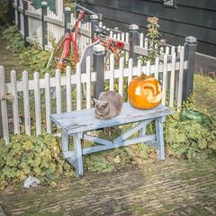 IMG_9612 (digitalarch) Tags: netherlands zaanse schans zaanseschans    cat