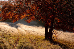 Winter and autumn in one (๑۩๑ V ๑۩๑) Tags: winter invierno bukk bukkmountains bukkhegyseg hegyseg nature naturaleza hungary hungria magyarorszag macaristan clearing forest tree autumn fall morning chilly cold outdoor hiking