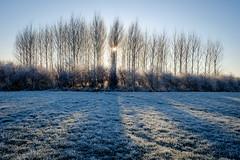 Duivense Broek (Arnold van Wijk) Tags: landschap landscape winter frozen gelderland duiven nederland netherlands polder weiland