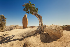 Best Friends Forever (Allard Schager) Tags: california shadow usa tree nature rock america landscape outdoors daylight nationalpark spring crossprocessed nikon rocks unitedstatesofamerica icon vegetation april amerika 16mm lente monolith iconic speedlight breathtaking juniper lonetree bff californie spectacle solitarytree extremewideangle joshuatreenationalpark sanbernardinocounty riversidecounty bestfriendsforever flashgun beautyinnature 2013 jeneverbes d700 nikond700 nikkor1424mmf28 crossbalance nikonfx allardone allard1 nikonsb910 allardschagercom