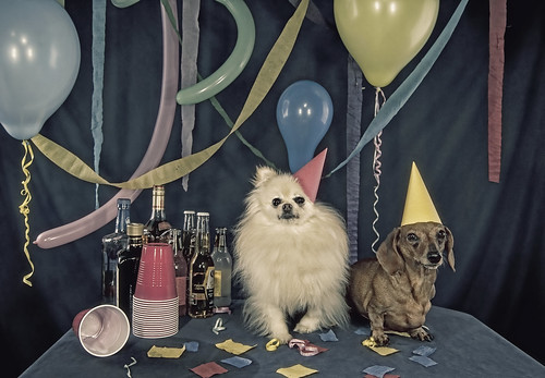 Party Animals - serious about partying