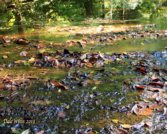Creek in Edmonson county (dalewillis1) Tags: elementsorganizer