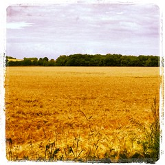 Champ de bl Poyaudin (NJ89120) Tags: landscape route paysage bourgogne vue chemin vlo champ randonne bl charny yonne puisaye
