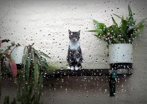 Minette in the rain