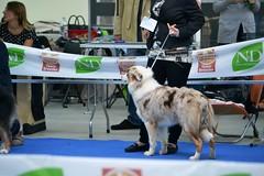 DSC_5885 (Large) (Renato De Iuliis) Tags: mostra chieti canina internazionale 2013 exp