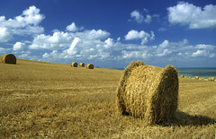 Côte d'Opale, paysage agricole (Ytierny) Tags: france horizontal nuage paysage champ foin pasdecalais graphisme littoral meule récolte côtedopale agricole céréale boulonnais sitedesdeuxcaps ytierny