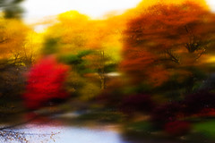 Abstract (Houry Photography -on/off) Tags: november autumn trees lake ny newyork fall colors leaves centralpark manhattan fallfoliage foliage waters cp canon7d wwwhourynphotographycom