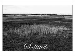 solitude (j.p.yef) Tags: bw reed landscape denmark solitude sw moor yef peterfey bestcapturesaoi jpyef