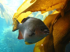 """The Monterey Bay Aquarium • <a style=""""font-size:0.8em;"""" href=""""http://www.flickr.com/photos/109120354@N07/11042941866/"""" target=""""_blank"""">View on Flickr</a>"""